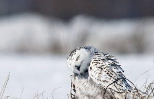 Donan Kuş